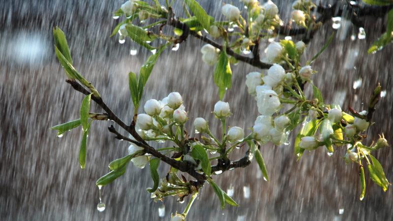 Πρόγνωση Θεσσαλίας και Σποράδων 20-22/4/20 Κακοκαιρία με βροχές και σημαντική πτώση της θερμοκρασίας (+χάρτες βροχής)
