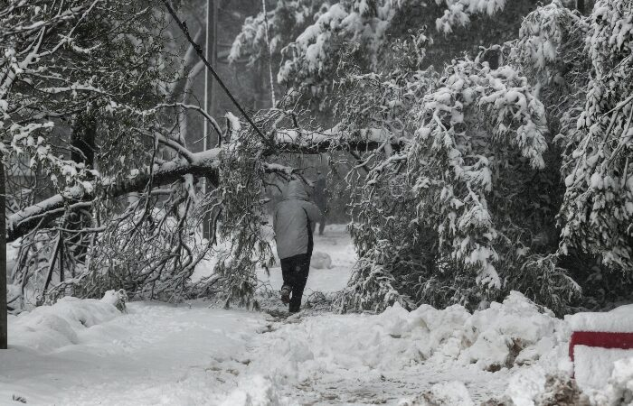 Ποια δένδρα αντέχουν σε δύσκολες καιρικές συνθήκες